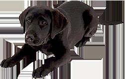 Dog-B